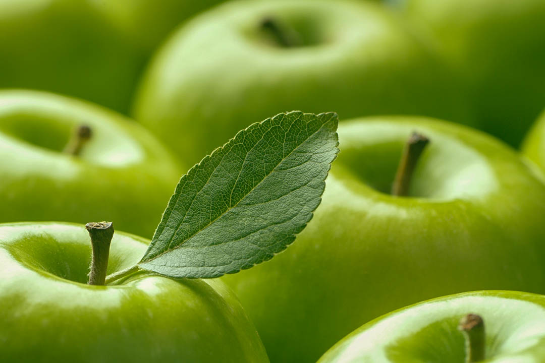 Picture of Green apple leaf